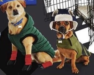 Entire Stock of Bond & Co. G2GO Fall Dog Apparel
