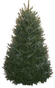 6-ft. to 7-ft. Fresh-Cut Fraser Fir Christmas Tree
